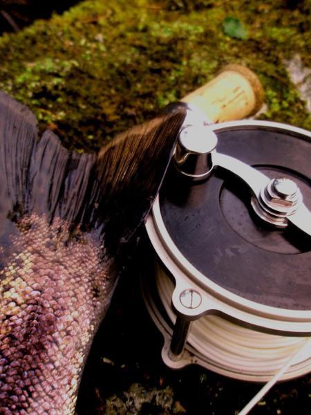 Regnbågsfiske