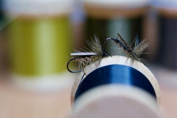 Needle fly/liten bäckslända