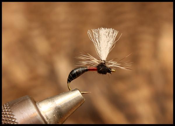 Parachute ant