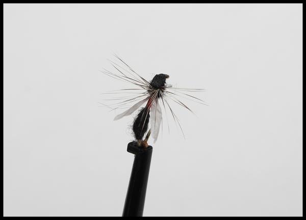 Flygmyra