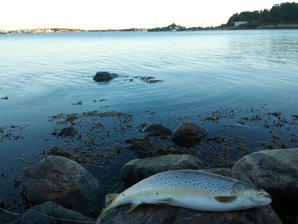 Sommaröring på Styrsö