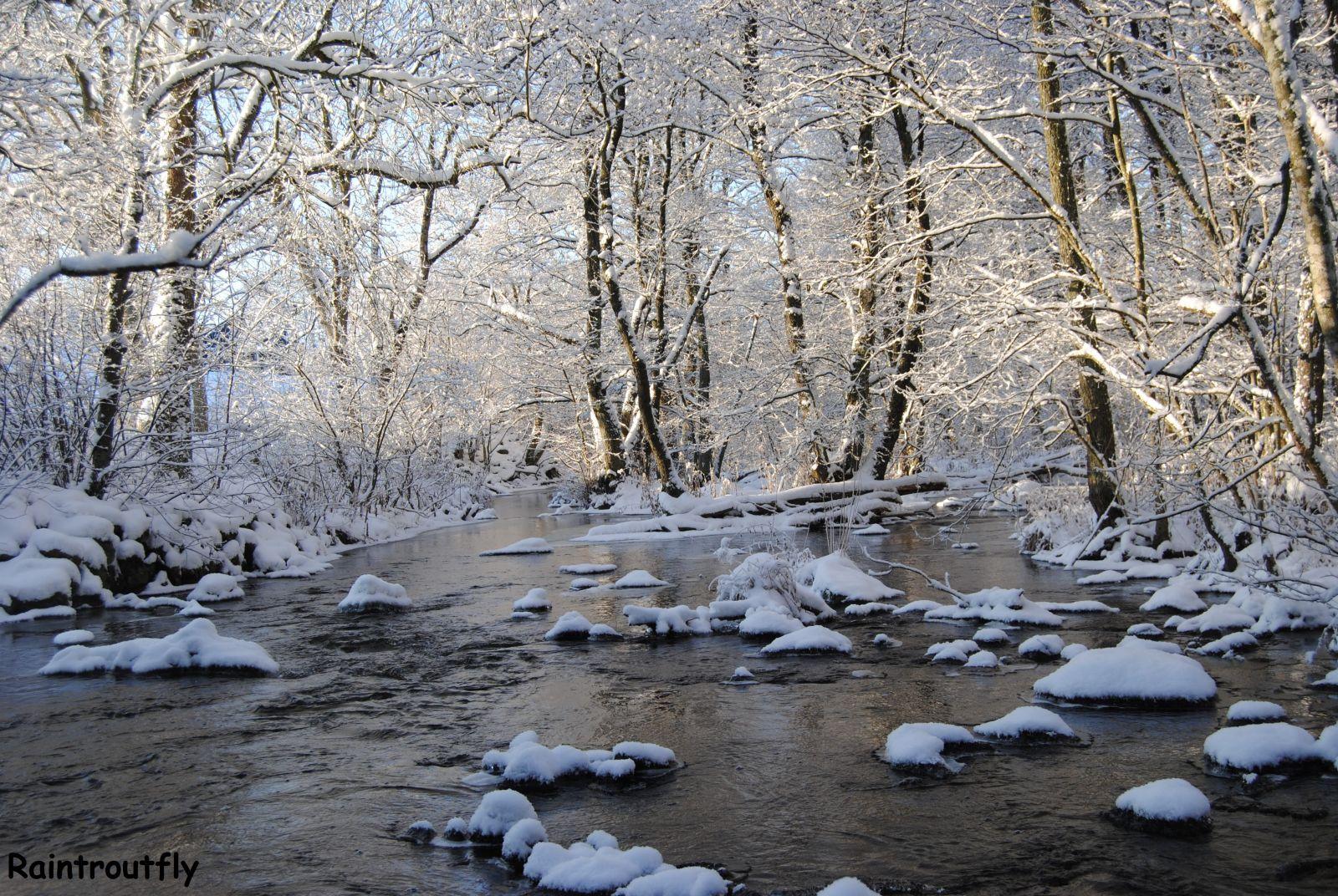 Flugor och naturbilder nu i vinter