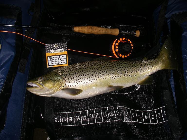 Hardy fiske spö dating