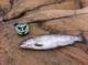 fishing_85